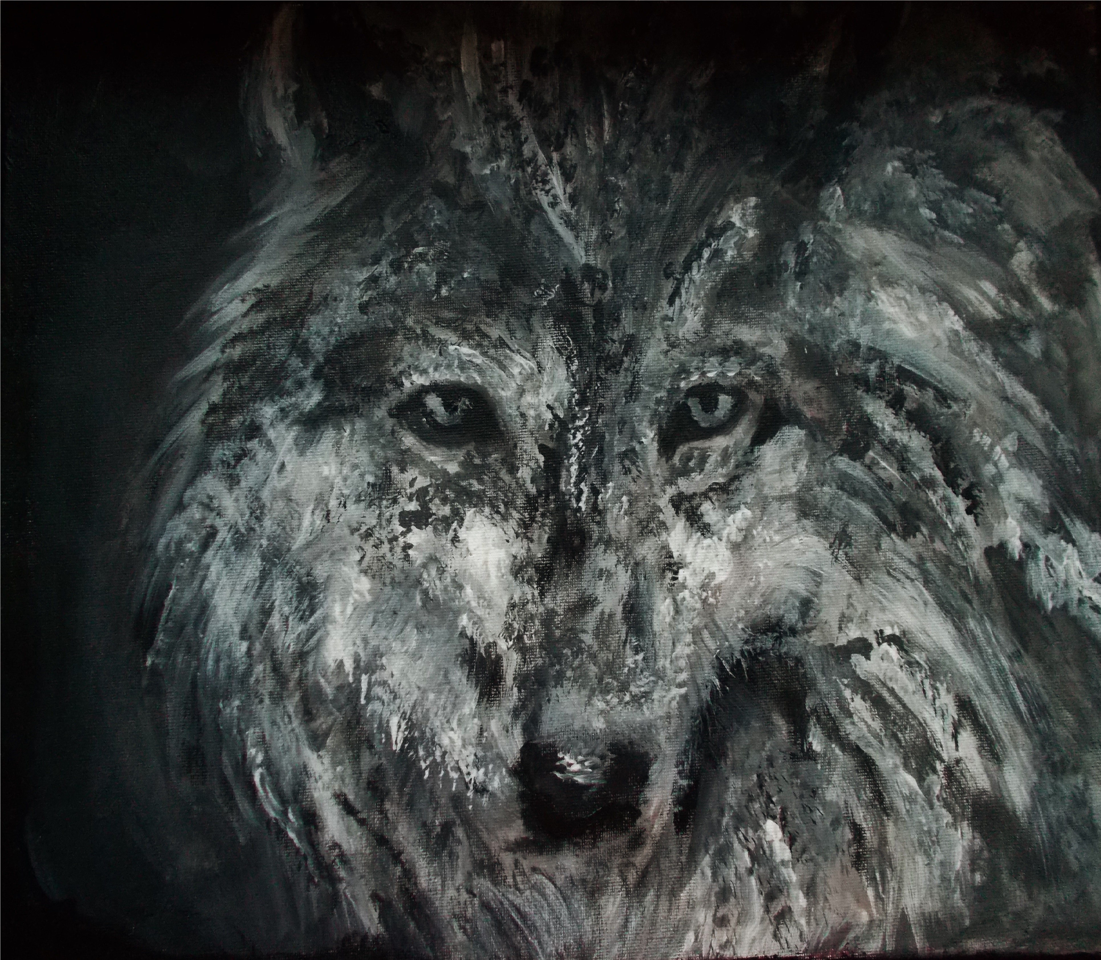 wolf by Darxi12