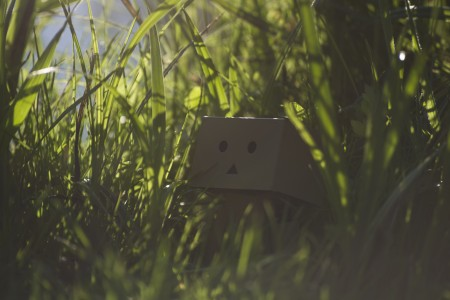 danbo by Forceofcolour