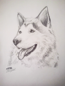 huskyyy a ka Lena by Aches